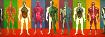 cuerpo humano, curiosidades, humano